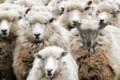 Sicilia, impedisce il pascolo nei terreni che sorveglia: picchiato da 2 pastori un custode