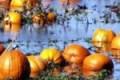 Provincia di Agrigento, Coldiretti: gravi i danni da maltempo in agricoltura