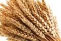 """E' obbligatoria l'etichettatura di origine del grano: """"Uno strumento in più per difendere il made in Sicily"""""""