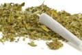 Controlli nei cannabis light shop, denunciato il titolare di una tabaccheria