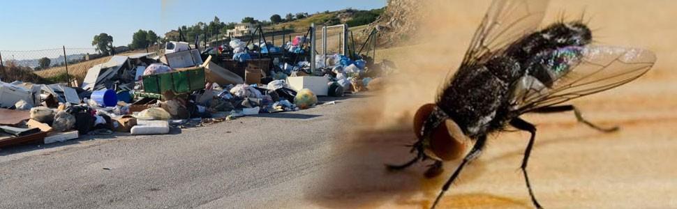 canicattì, Comitato 2021: l'Assessore all'ambiente, bloccato davanti ad una città assediata dai rifiuti ed ora di mosche, zanzare e insetti vari