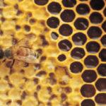 Sostegno all'apicoltura siciliana, governo regionale dà via libera allo stato di calamità naturale