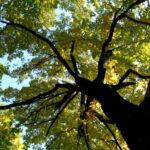 Tagliati oltre duecento alberi da terreno di agricoltore: indagini
