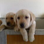 cuccioli-salvati