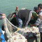 """Lampedusa, sindaco Martello: """"Verificare rispetto del fermo biologico"""""""