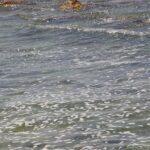 Proteggere la condotta Mare Nostrum dalle mareggiate, verso una soluzione definitiva