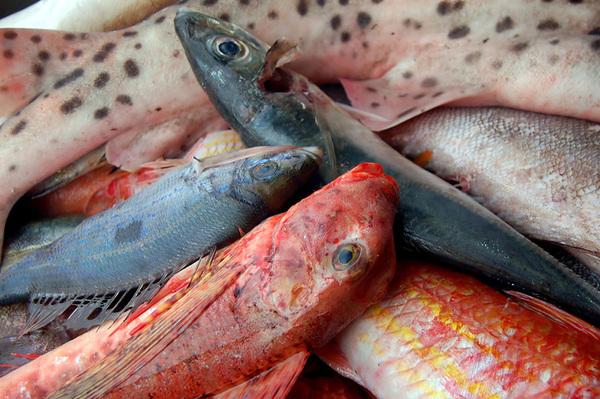 Catania, titolare di pescheria denunciato per frode: vendeva pesce congelato per fresco