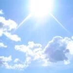 estate_sole.jpg