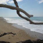 """Mareamico: """"tutti insieme per salvare la spiaggia dalle plastiche"""""""