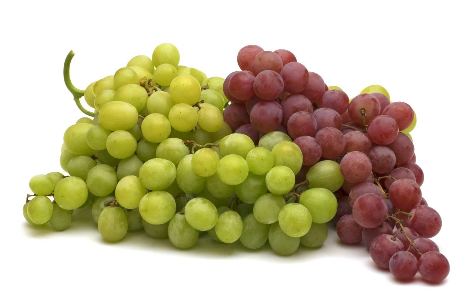 Coldiretti su vino Italia supera Francia