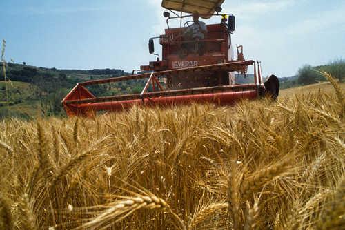 Il catasto terreni aggiorna le colture: l'elenco dei Comuni interessati dalle variazioni