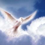 Naro: la MilBrut dona le colombe pasquali agli ospedali e alle Forze dell'Ordine (Video)
