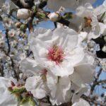 """Parte il concorso """"La Primavera Narese in uno scatto"""""""