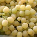 Castrofilippo, ladri d'uva in trasferta patteggiano pena di 6 mesi