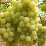 Settore vitivinicolo in crisi, il M5S chiede l'intervento della Regione
