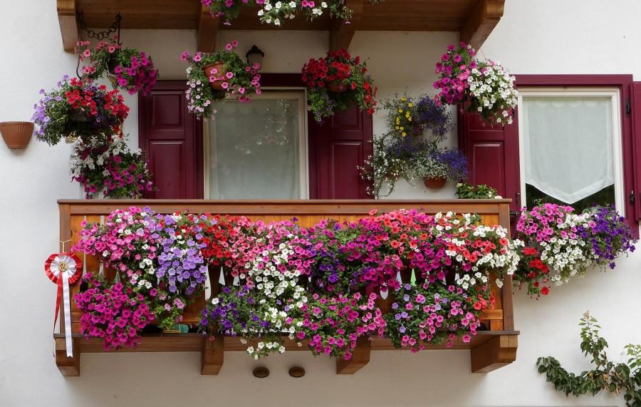 Delia al via il concorso balconi fioriti canicatti for Terrazzi fioriti