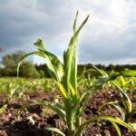 """Danni alluvione 2018, Sunseri (M5S): """"Semplificare le procedure per le imprese agricole"""""""
