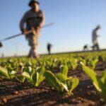 Agricoltura biologica, piccoli imprenditori e deputati presentano disegno di legge regionale
