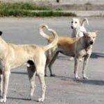 A Naro, Insieme si può segnala la presenza di branchi di cani randagi nel quartiere Baglio