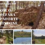 Natura e archeologia industriale: sabato 5 la camminata nel bosco dell'ex miniera di Zolfo Apaforte-Stincone